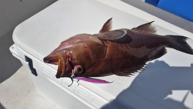 grouper-1.jpg